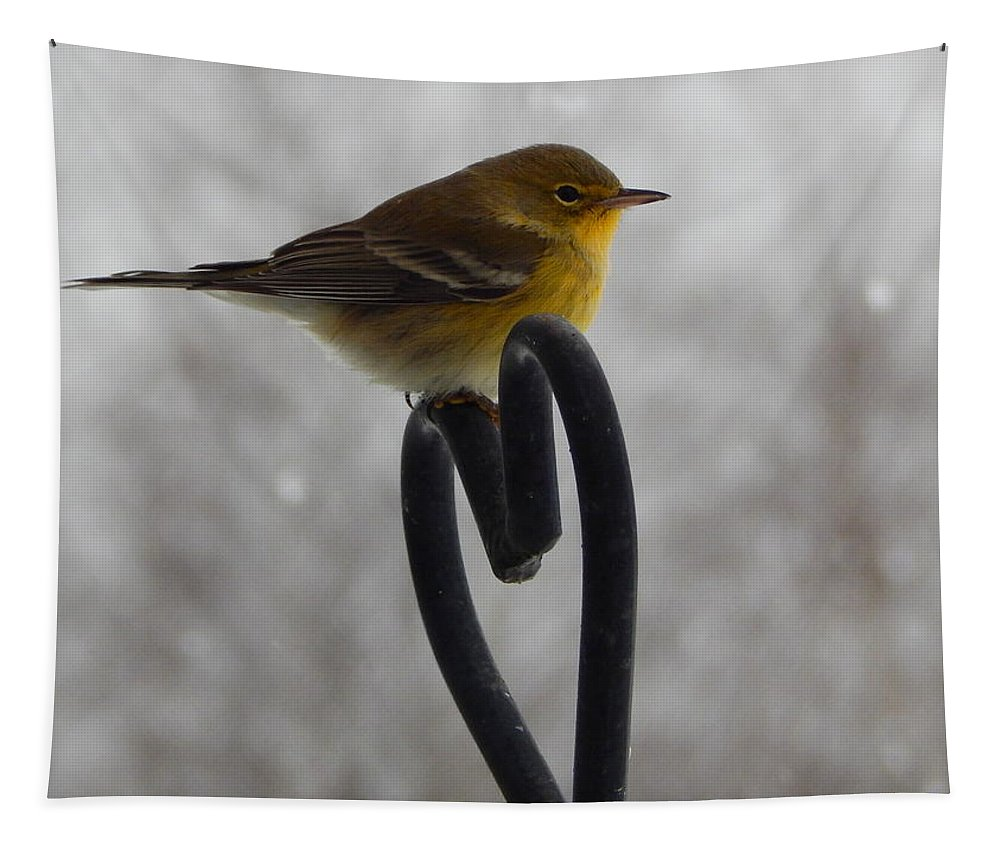 Pining For You Tapestry featuring the photograph Pining For You by Karen Cook