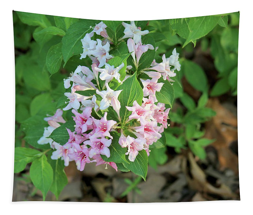 Flowers Tapestry featuring the photograph Pink And White Flowers by Michael Munster