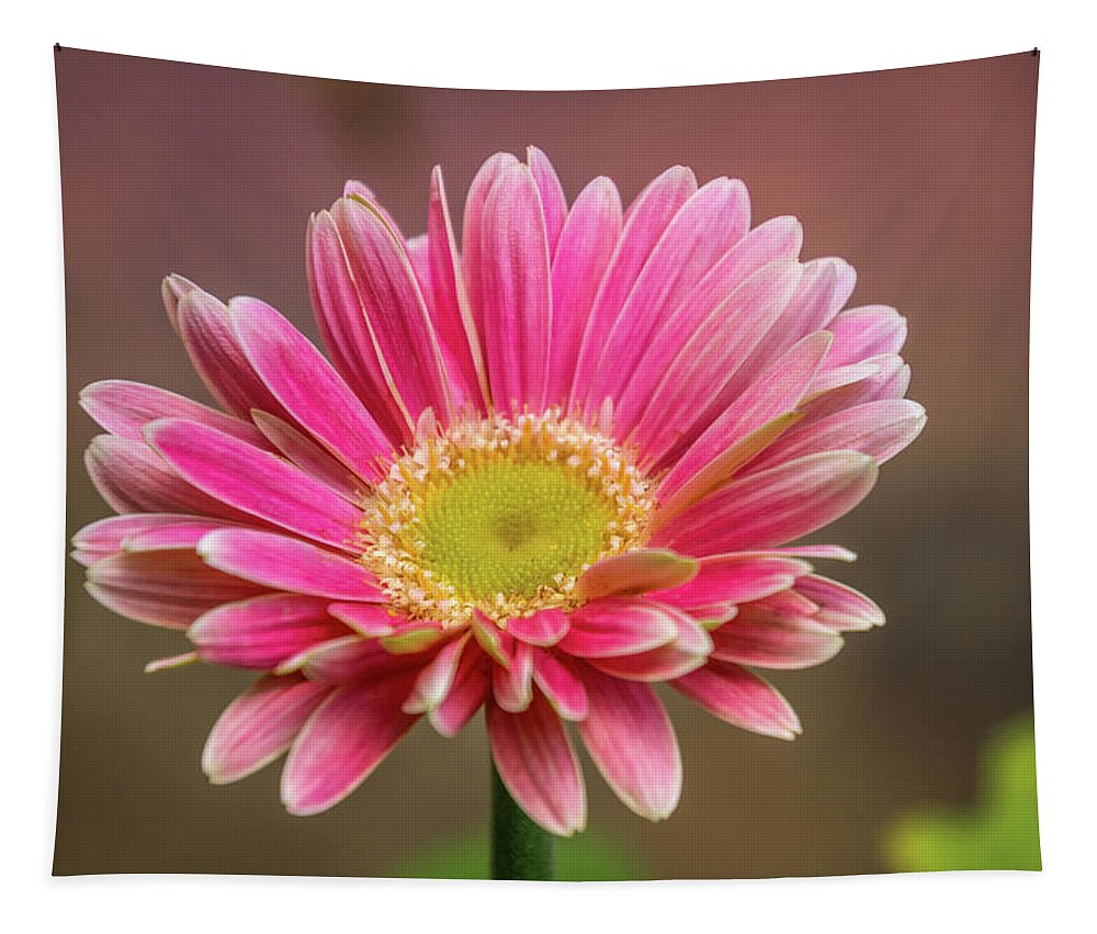 Flower Tapestry featuring the digital art Pink And White by Terry Davis