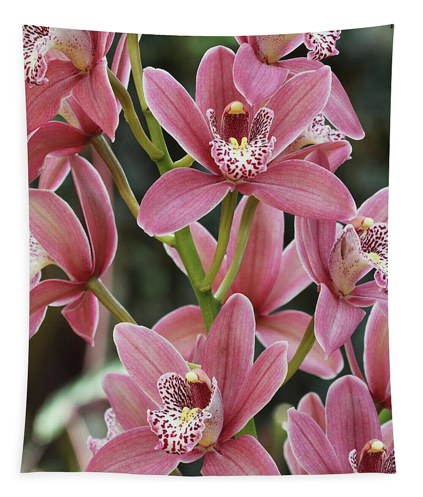 Orchid Tapestry featuring the photograph Pink Cymbidium Orchid #3 by Judy Whitton