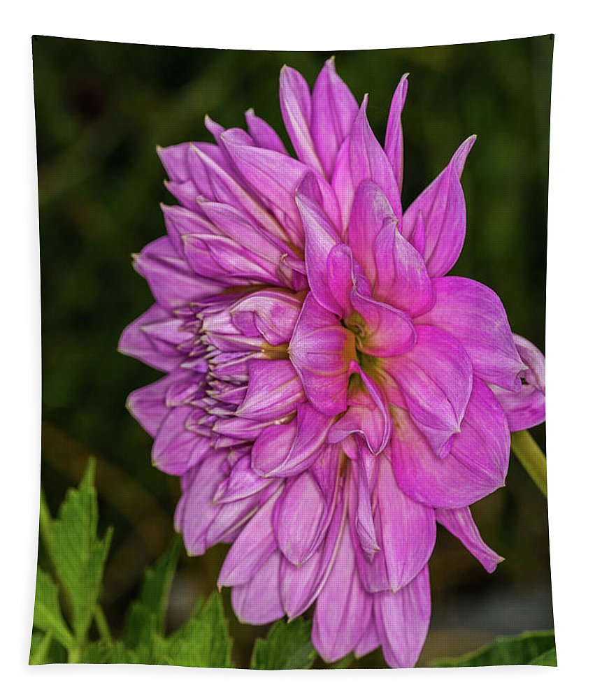 Pink Dahlia Tapestry featuring the photograph Pink Dahlia 2 by Steve Purnell