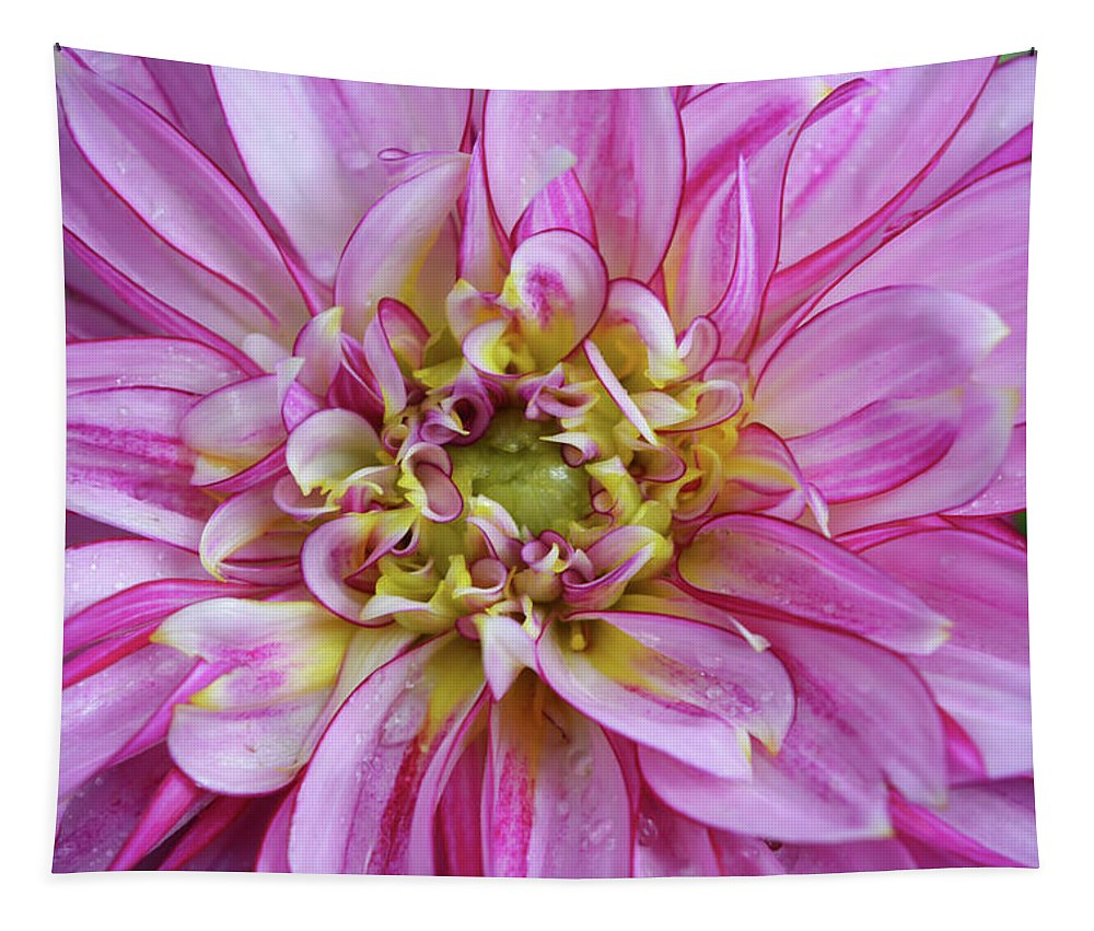 Dahlia Tapestry featuring the photograph Pink Dahlia by Aimee L Maher ALM GALLERY