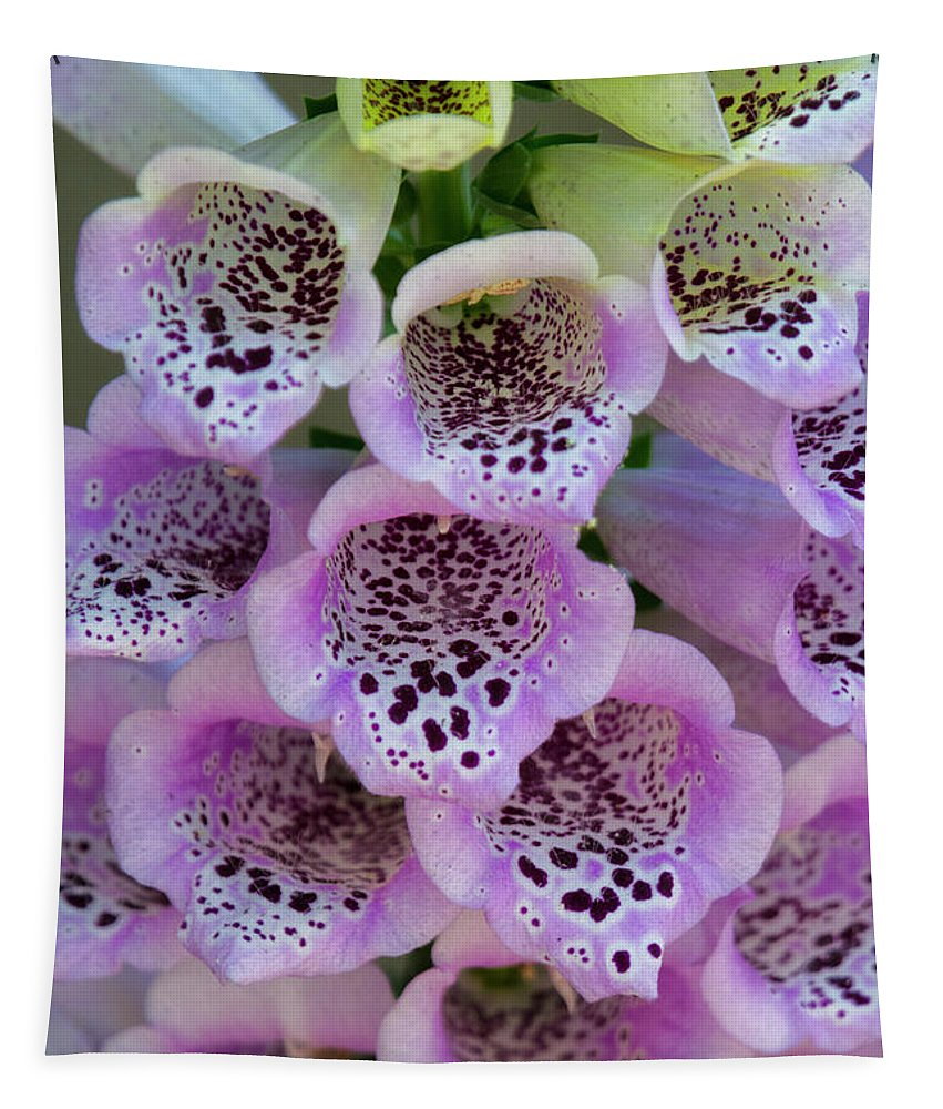 Foxglove Tapestry featuring the photograph Pink Foxglove by Saija Lehtonen