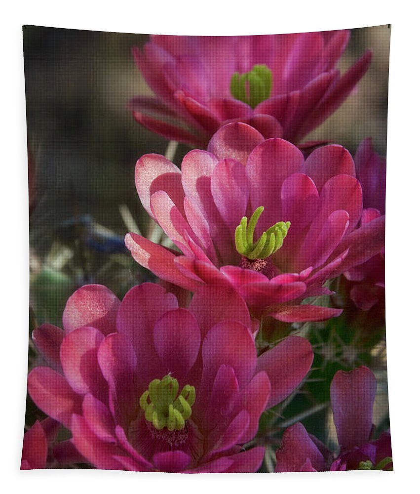 Pink Hedgehog Flowers Tapestry featuring the photograph Pink Hedgehog Flowers by Saija Lehtonen