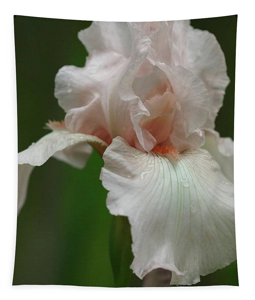 Iris Tapestry featuring the photograph Pink Iris by Michael Munster