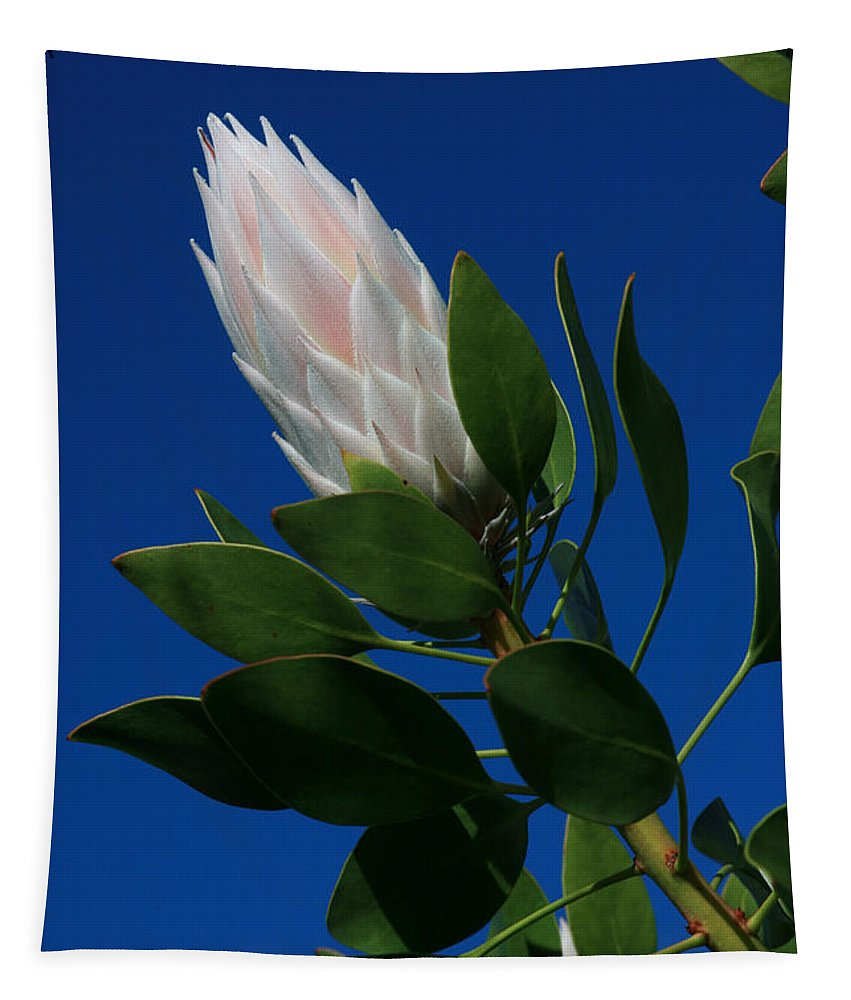 Aloha Tapestry featuring the photograph Pink King Protea Kula Maui Hawaii by Sharon Mau