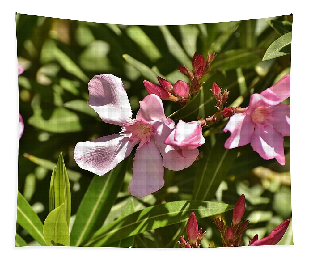 Linda Brody Tapestry featuring the photograph Pink Oleander Iv by Linda Brody