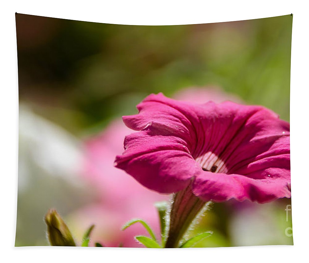 Pink Tapestry featuring the photograph Pink Petunia by Andrea Anderegg