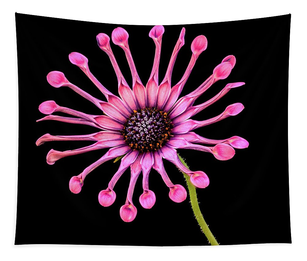 Jean Noren Tapestry featuring the photograph Pink Pinwheel by Jean Noren