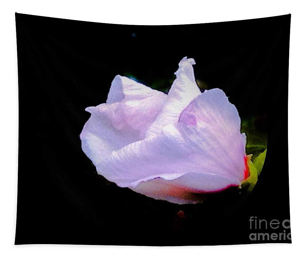 Rose-of-sharon Tapestry featuring the photograph Pink Rose Of Sharon Glowing On A Black Background by Debra Lynch