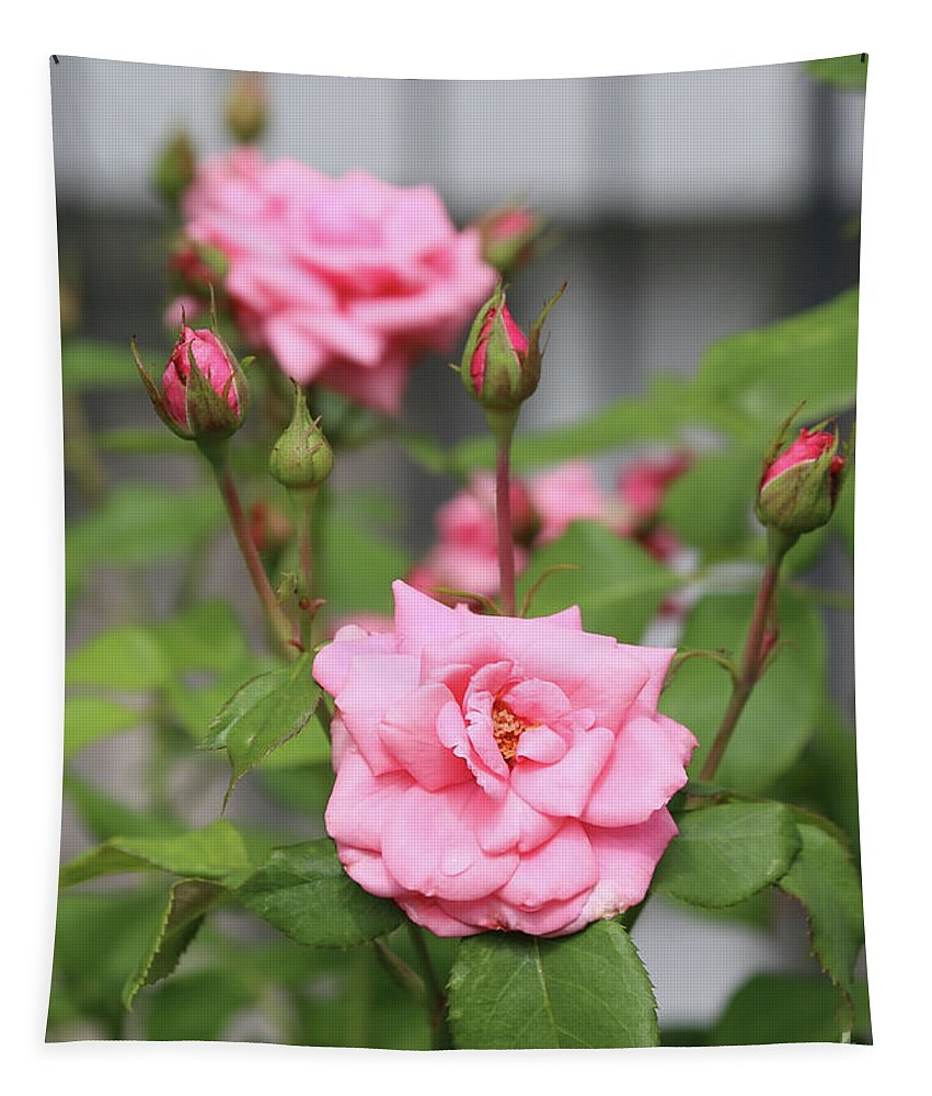 Pink Rose Tapestry featuring the photograph Pink Rose With Buds by Carol Groenen