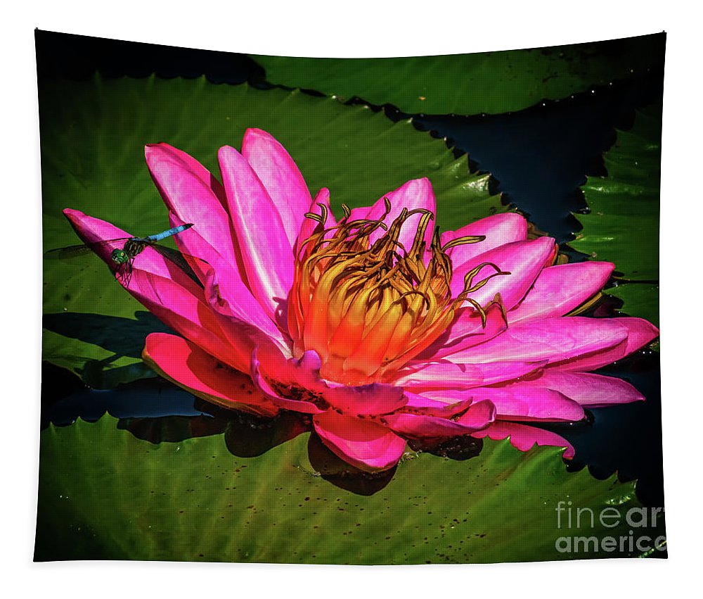 Flowers Tapestry featuring the photograph Pink Summer Water Lily by Nick Zelinsky