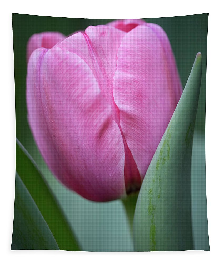 Pink Tulip Beauty Tapestry featuring the photograph Pink Tulip Beauty by Dale Kincaid