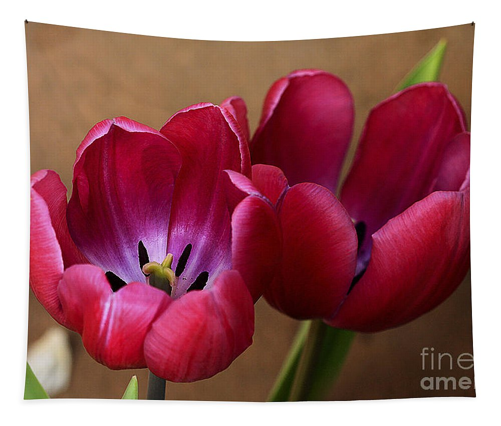 Pink Tapestry featuring the photograph Pink Tulip Pair by Deborah Benoit