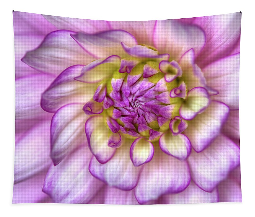 Zinnia Tapestry featuring the photograph Pink Zinnia Close Up by Mark Kiver