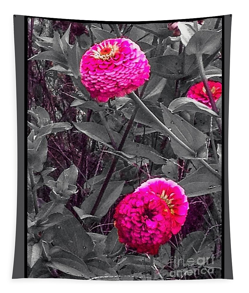 Flowers Tapestry featuring the photograph Pink Zinnias Against Grey Background by Debra Lynch