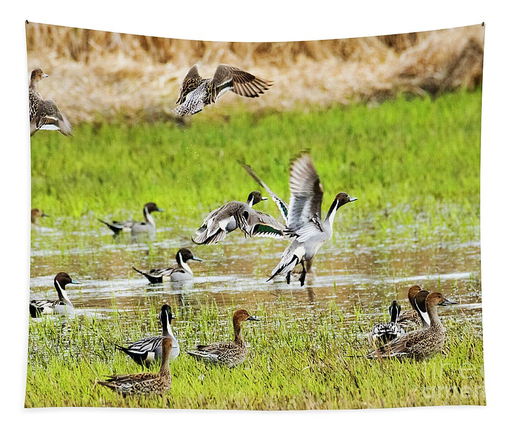 Northern Pintails Tapestry featuring the photograph Pintail Take-off by Mike Dawson