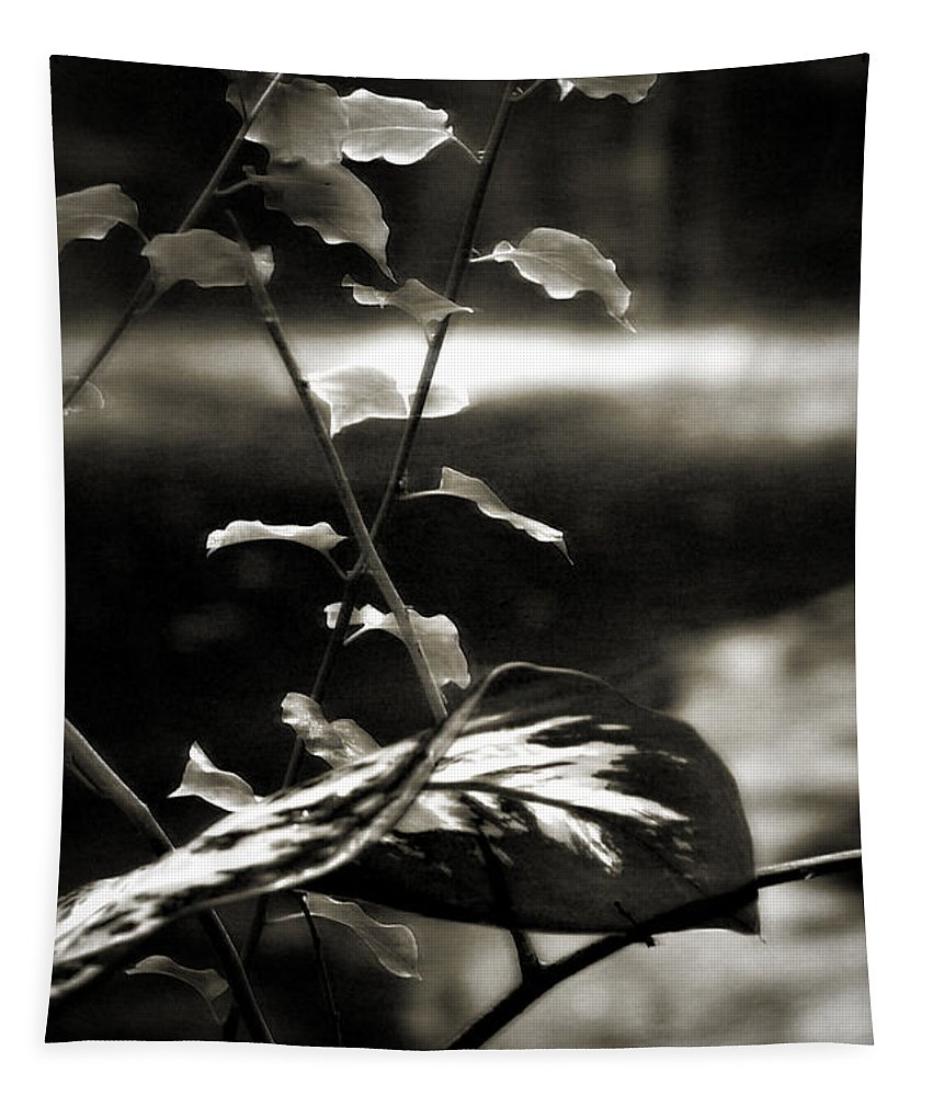 Fern Tapestry featuring the photograph Plant 8657 by Timothy Bischoff
