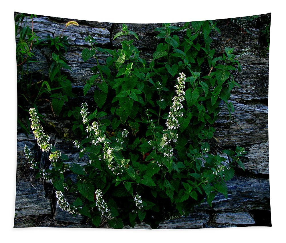Wild Flower Tapestry featuring the photograph Plants Grow Anywhere by Donna Brown