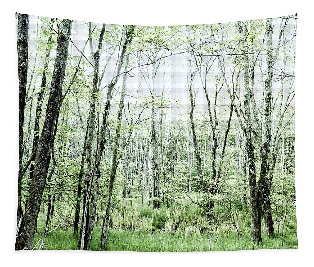Woods Tapestry featuring the photograph Pleasure Of Pathless Woods - Alt by Belinda Greb