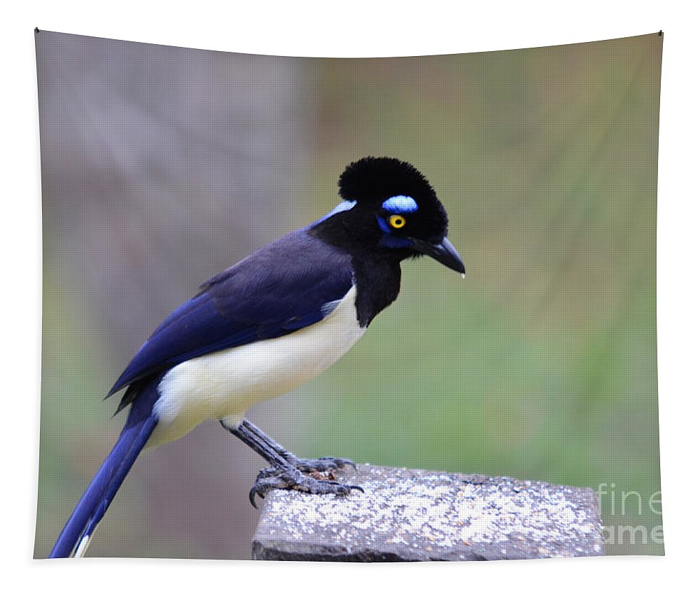 Pantanal Tapestry featuring the photograph Plush Crested Jay by Ralf Broskvar