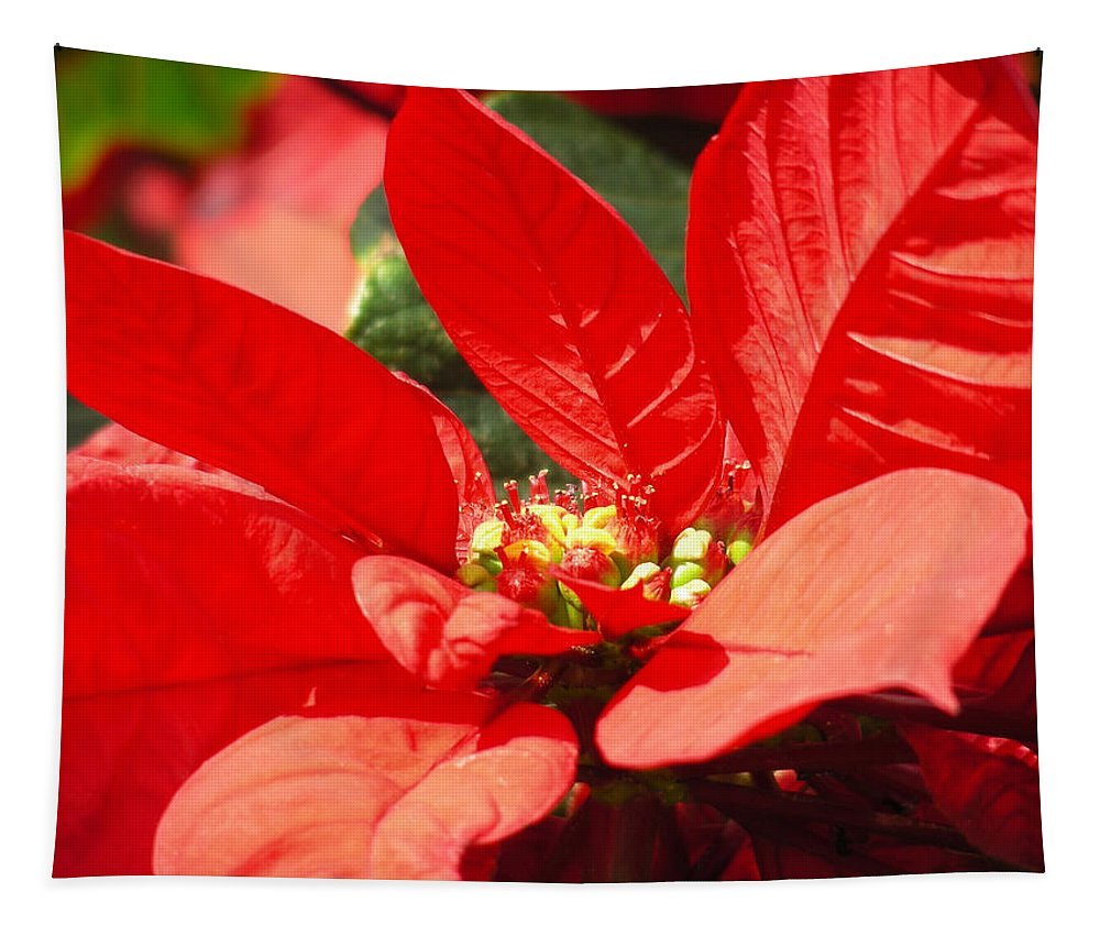 Poinsettia Tapestry featuring the photograph Poinsettia by Mary Lane