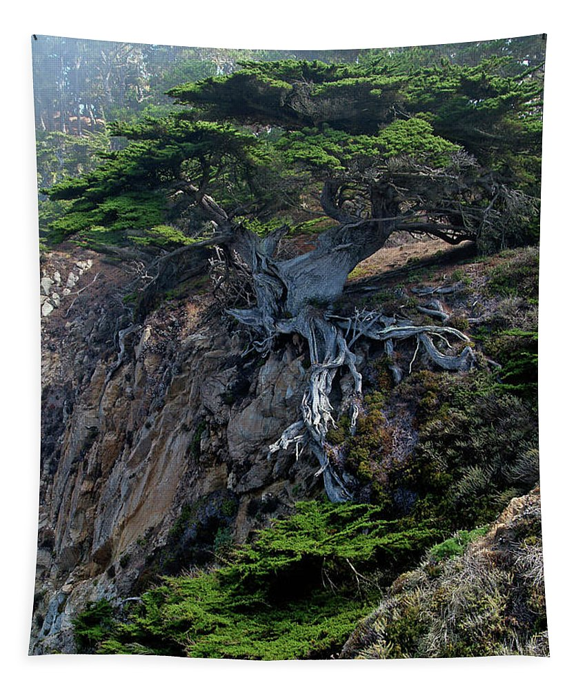 Landscape Tapestry featuring the photograph Point Lobos Veteran Cypress Tree by Charlene Mitchell