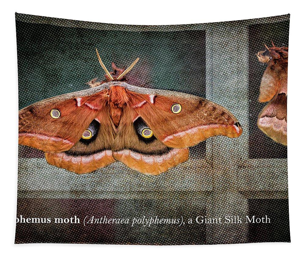 Polyphemus Moth Tapestry featuring the photograph Polyphemus Moth by Belinda Greb