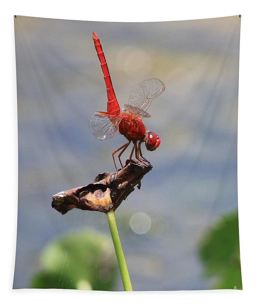 Dragonflies Tapestry featuring the photograph Pond Ballerina by Carol Groenen