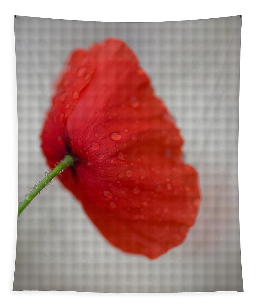 Poppy Tapestry featuring the photograph Poppy After The Rain by Rachel Morrison