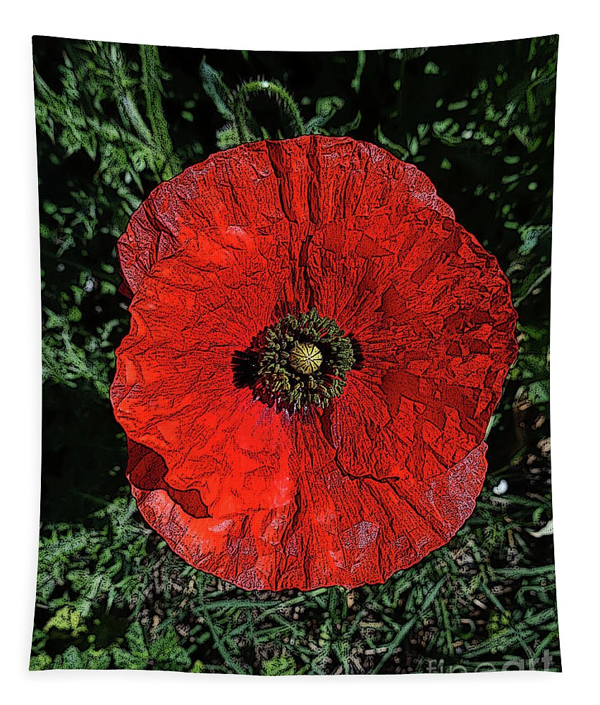 Flower. Flowers Tapestry featuring the photograph Poppy by Don Pedro DE GRACIA