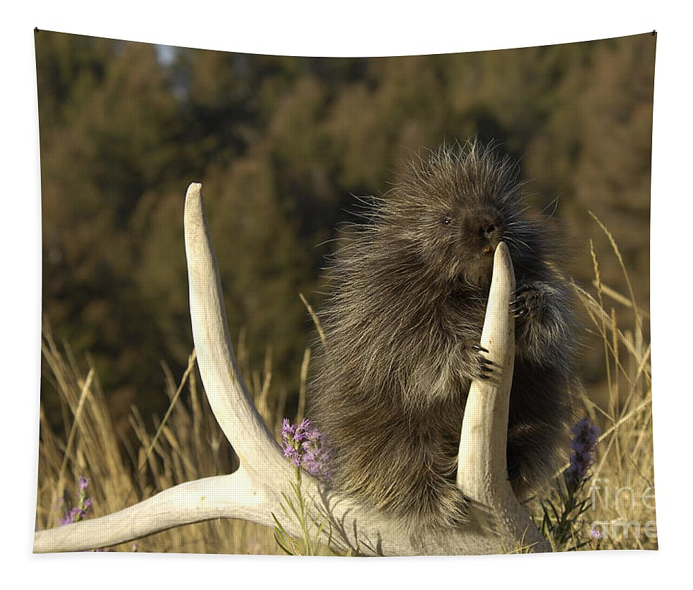 Porcupine Tapestry featuring the photograph Porcupine by Wildlife Fine Art