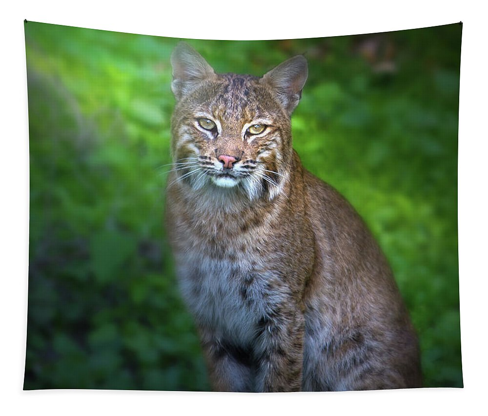 Bobcat Tapestry featuring the photograph Portrait Of A Lady by Mark Andrew Thomas