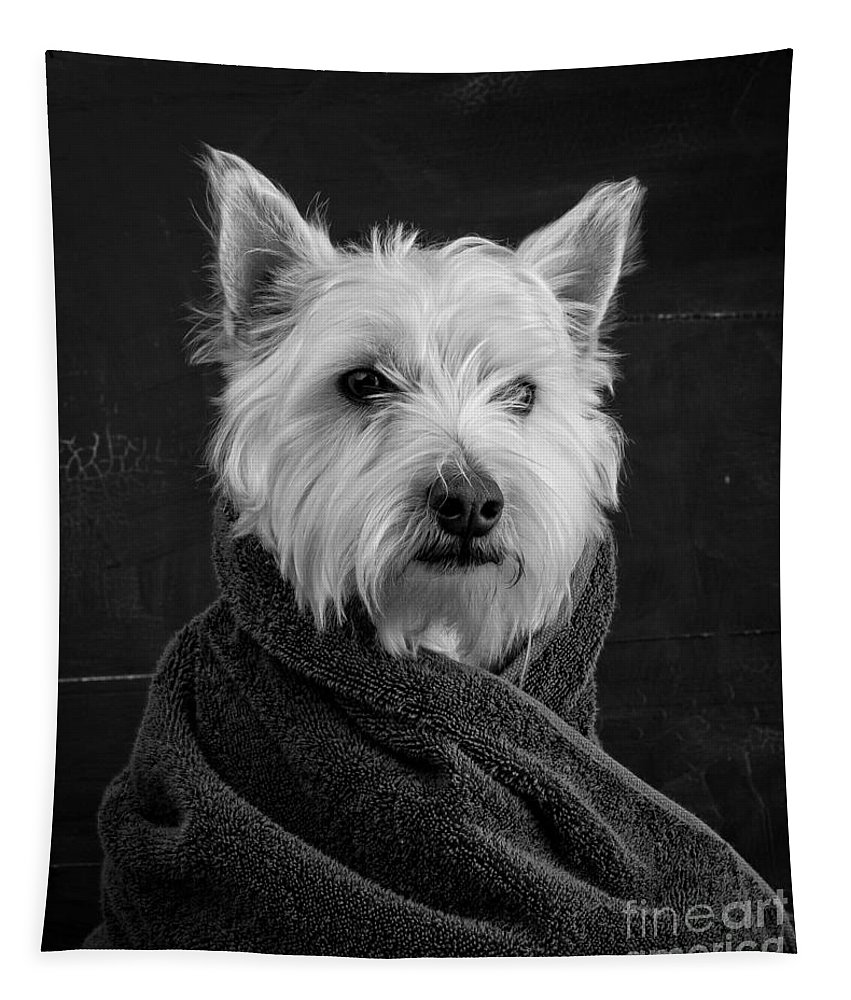 Portrait Of A Westie Dog Tapestry featuring the photograph Portrait Of A Westie Dog by Edward Fielding