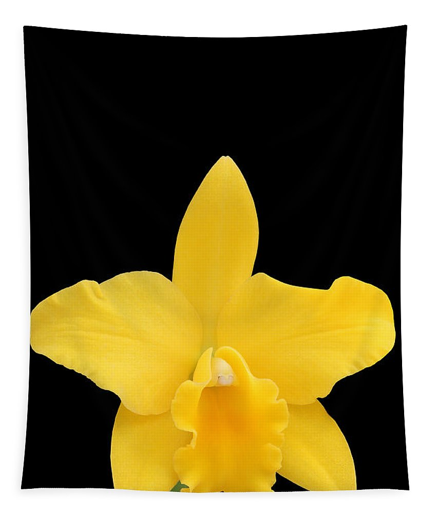 Orchid Tapestry featuring the photograph Potinara Shinfong Little Love #3 by Judy Whitton