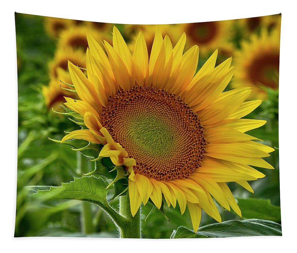 Sunflower Tapestry featuring the photograph Praising The Sun by Josh Spengler