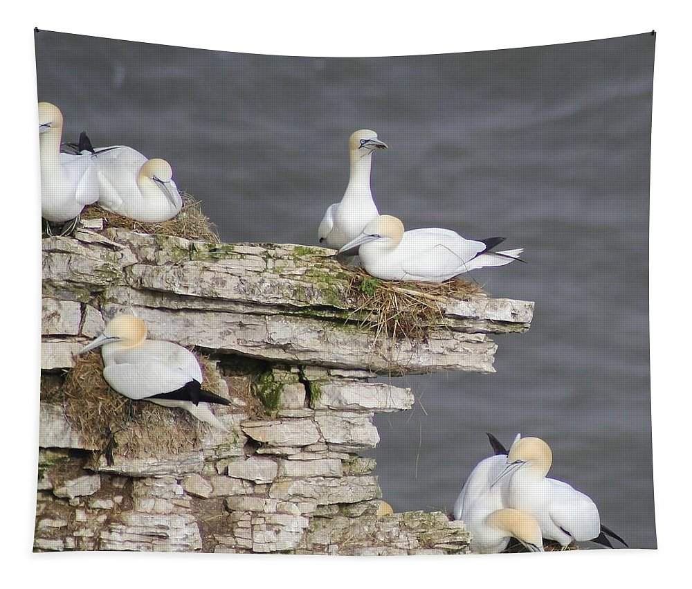 Gannet Tapestry featuring the photograph Precarious Nesting Bempton Gannets by Mo Barton
