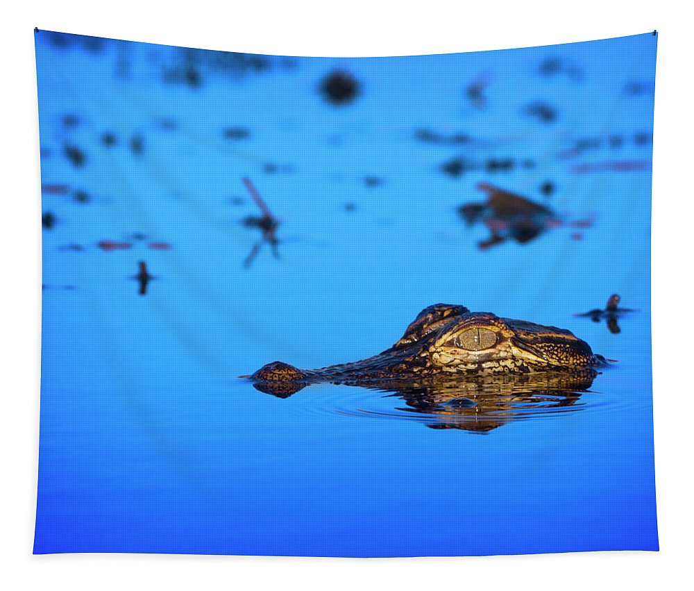 Alligator Tapestry featuring the photograph Predator In Training by Mark Andrew Thomas