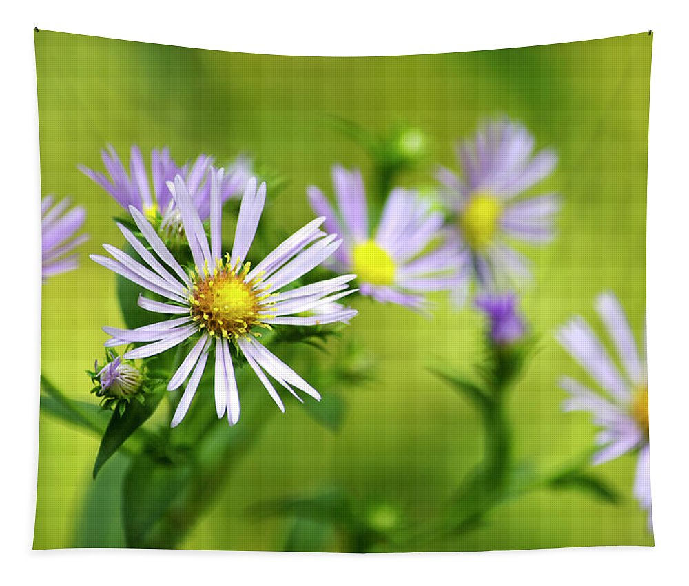 Country Wildflowers Tapestry featuring the photograph Pretty Aster Flowers by Christina Rollo
