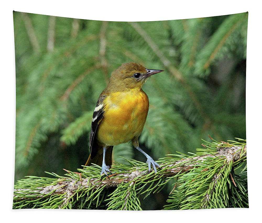 Oriole Tapestry featuring the photograph Pretty Girl by Debbie Oppermann
