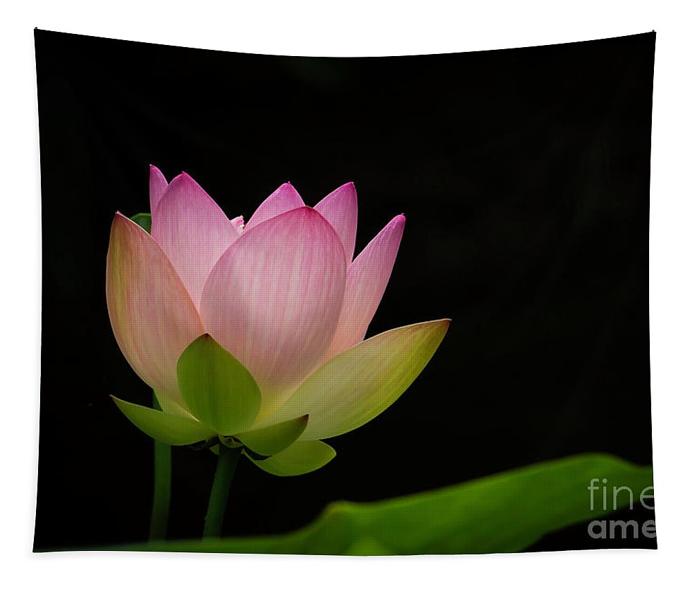 Spring Tapestry featuring the photograph Pretty Pink Lotus by Sabrina L Ryan