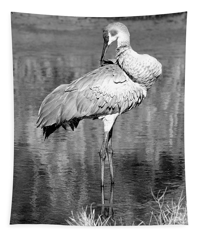 Sandhill Crane Tapestry featuring the photograph Pretty Preener Black And White by Carol Groenen