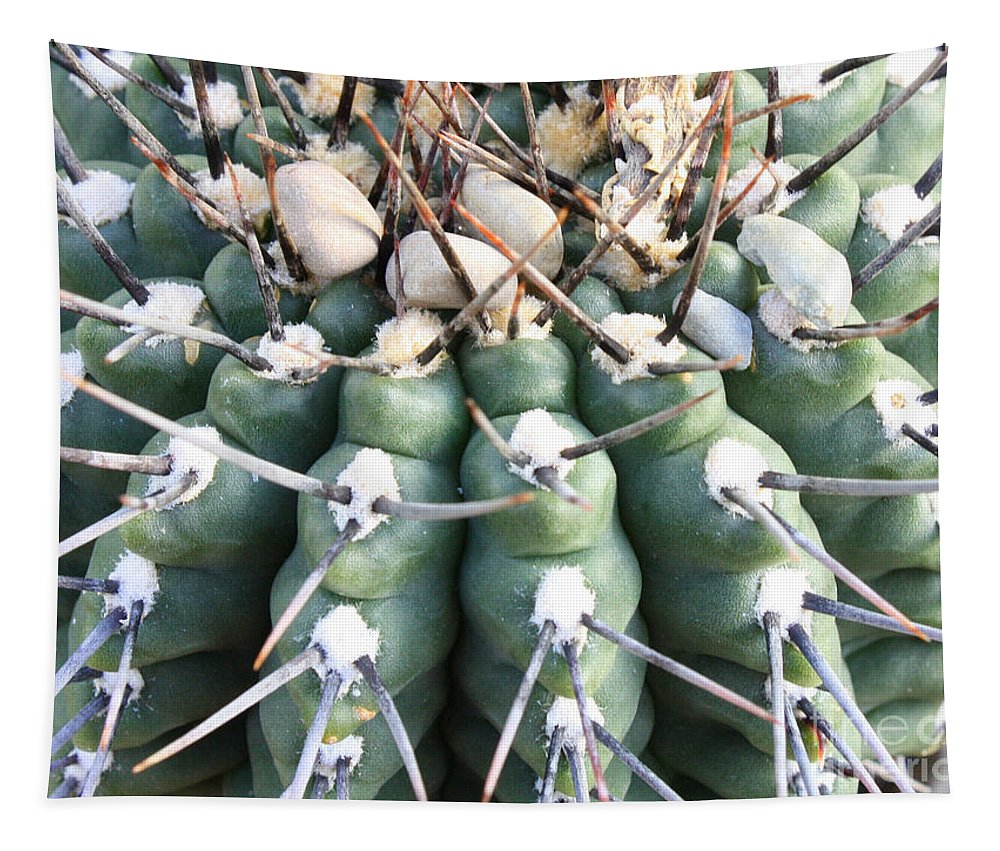 Cactus Tapestry featuring the photograph Prickly Cactus by Carol Groenen