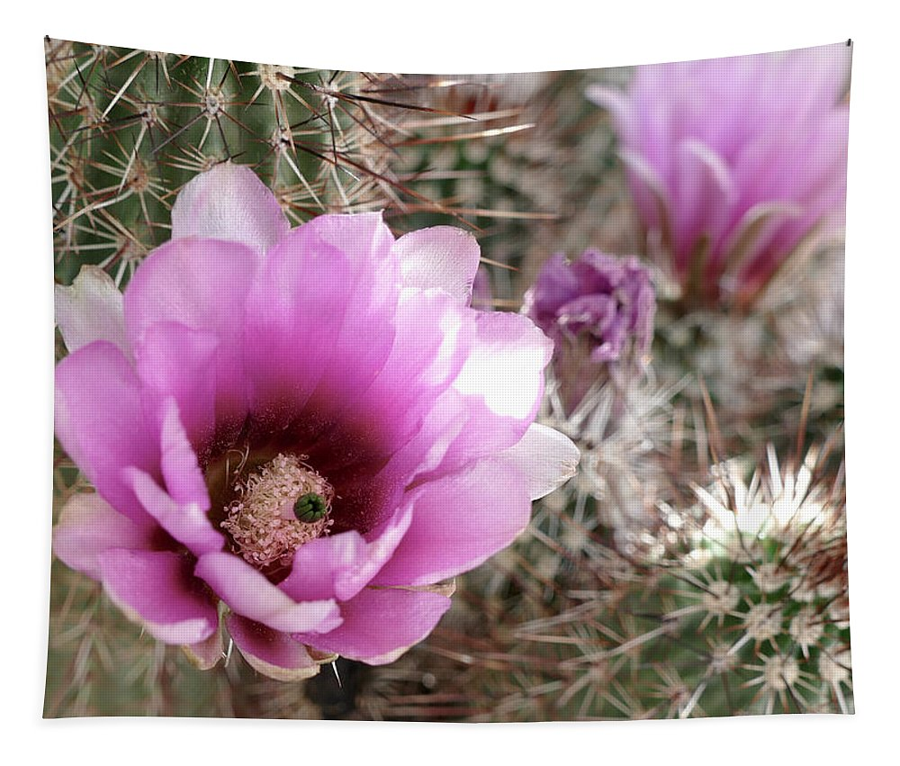 Engelmann's Hedgehog Cactus Tapestry featuring the photograph Prickly Petals by Laurel Powell