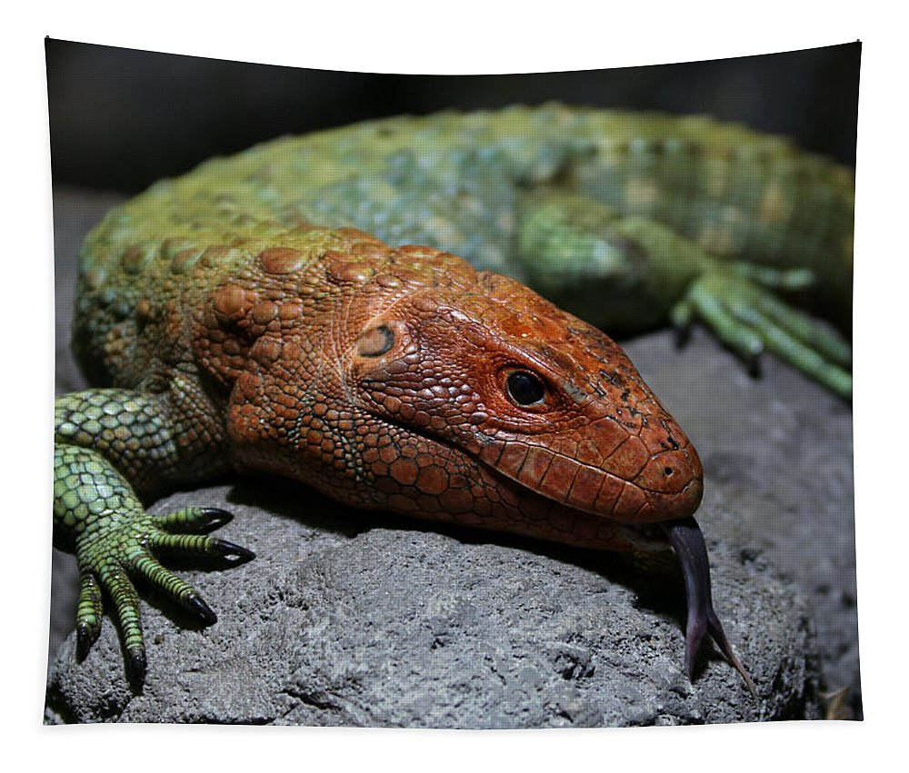 Caiman Lizard Tapestry featuring the photograph Professional Rock Taster by Debi Dalio