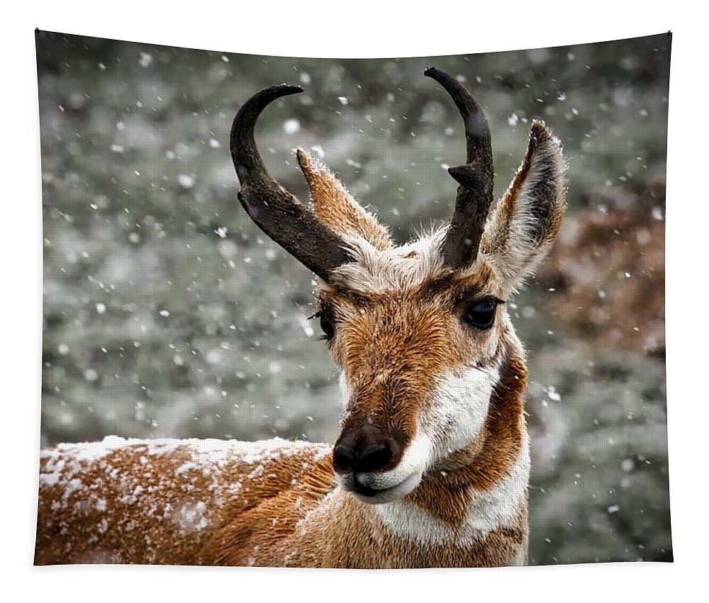 Yellowstone National Park Tapestry featuring the photograph Pronghorn Buck In Snow - Yellowstone National Park by Neal Herbert