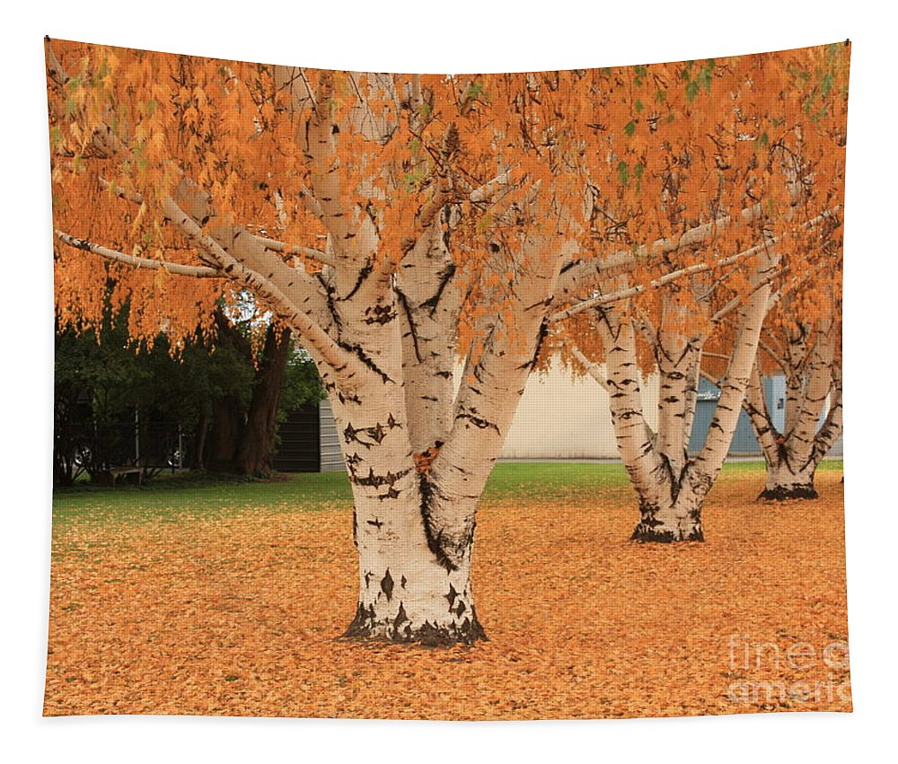 Autumn Landscape Tapestry featuring the photograph Prosser - Autumn Birch Trees by Carol Groenen
