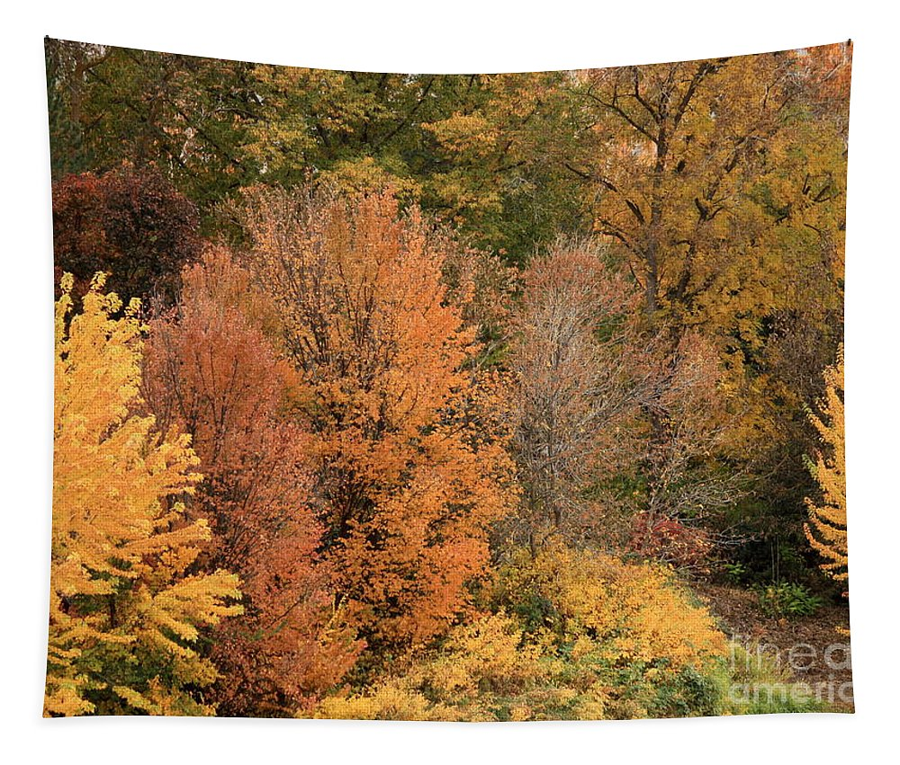 Tapestry featuring the photograph Prosser - Fall Foliage by Carol Groenen
