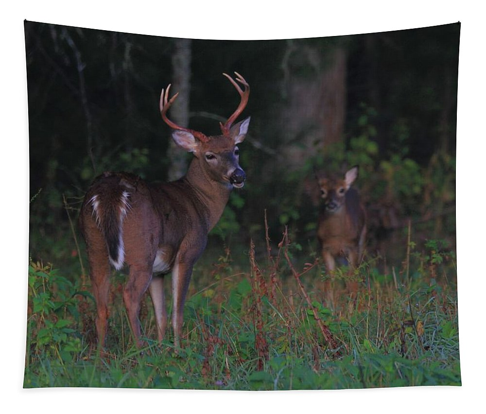 Protective Father Tapestry featuring the photograph Protective Father by Dan Sproul