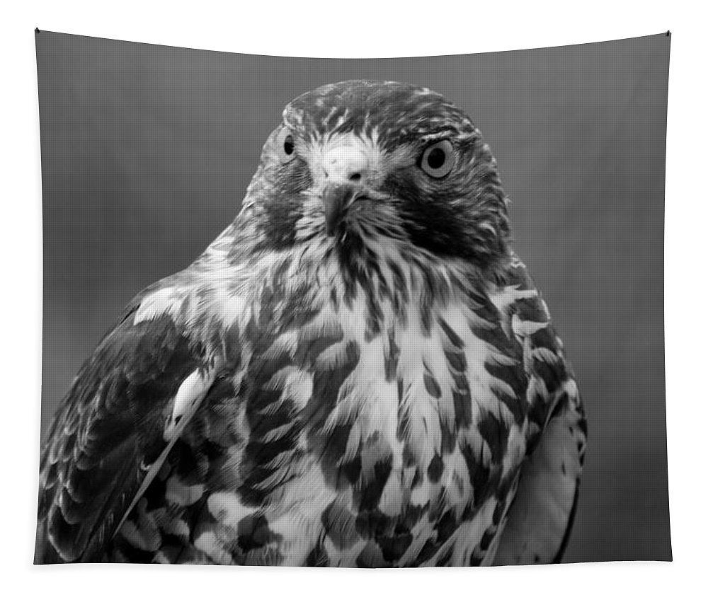 Hawk Tapestry featuring the photograph Proud Hawk by Richard Bryce and Family